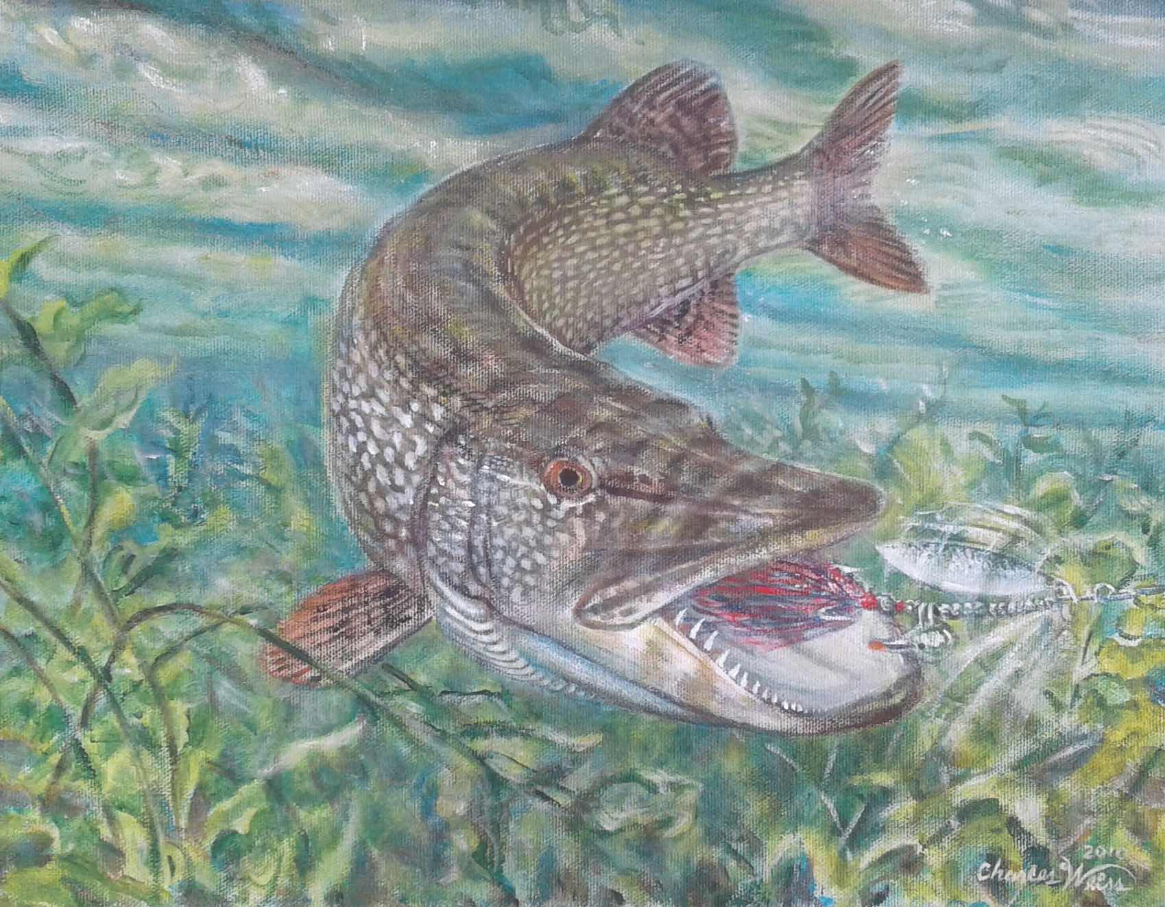 esoxonly-charles-weiss-northern-pike-attack