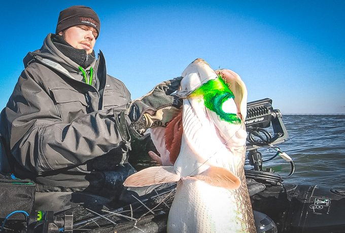 Giant Northern Pike on the Fly using the Raymarine Element 7 & Abu Garcia BEAST Bellyboat with the Navionics Relief Shading